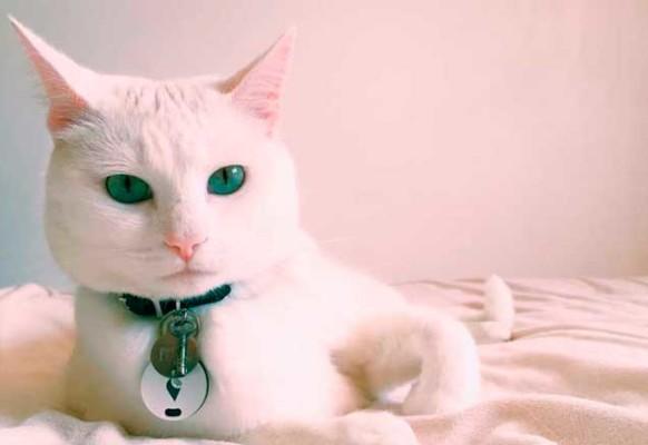 gato-trackr